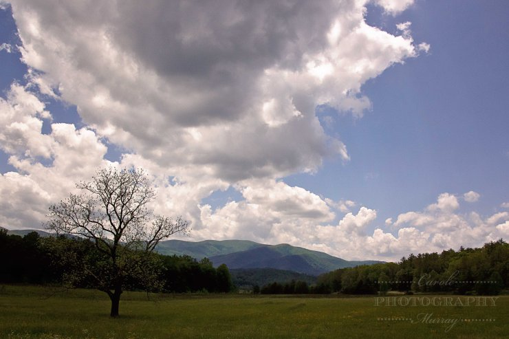 Cades Cove, Tennessee (May 2017)